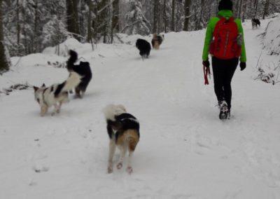 Silvesterspaziergang zugunsten des Tierheims Wollaberg