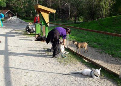 Wildpark Ortenburg