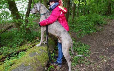 Sabine und Odin (Deutsche Dogge)
