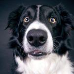 dog-2286773_1920